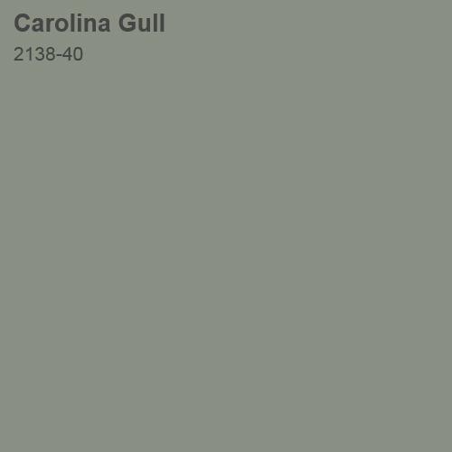 Carolina Gull